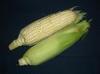 Corn_1