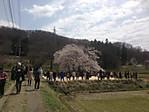 Ishibezakura_12