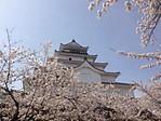 Sakura_12